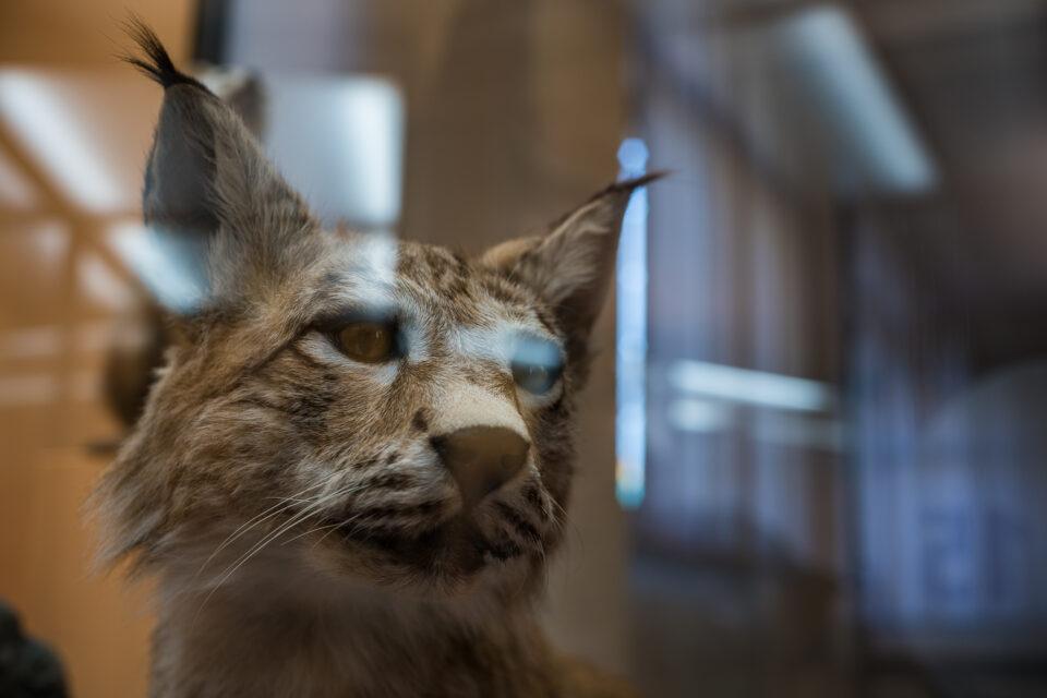 Karsten Rohrbeck: Studiis Zoologicis (7/17)
