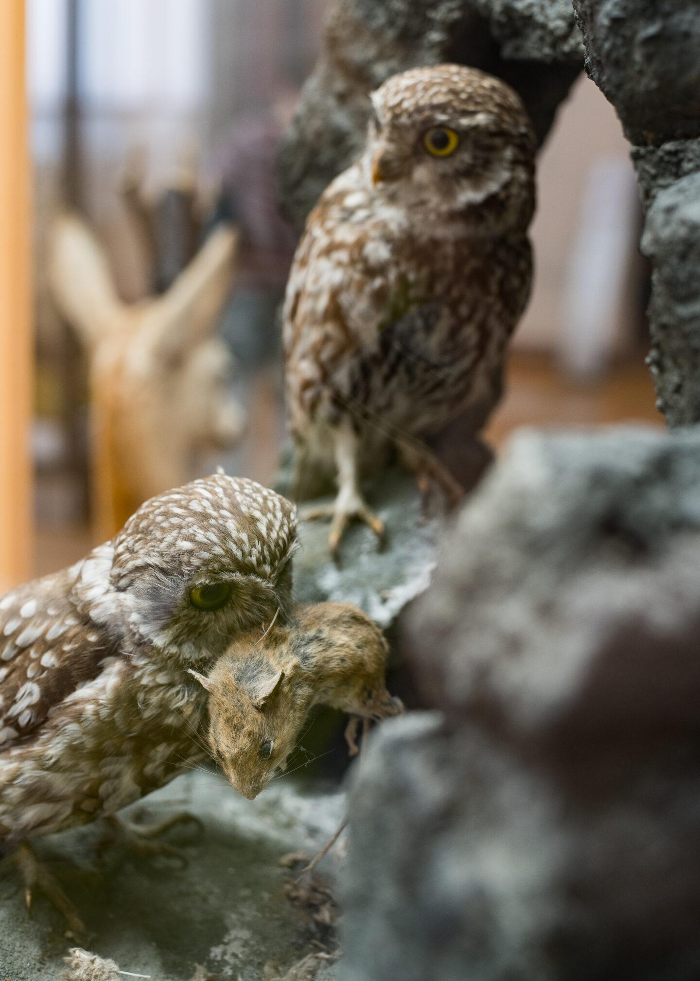 Karsten Rohrbeck: Studiis Zoologicis (10/17)
