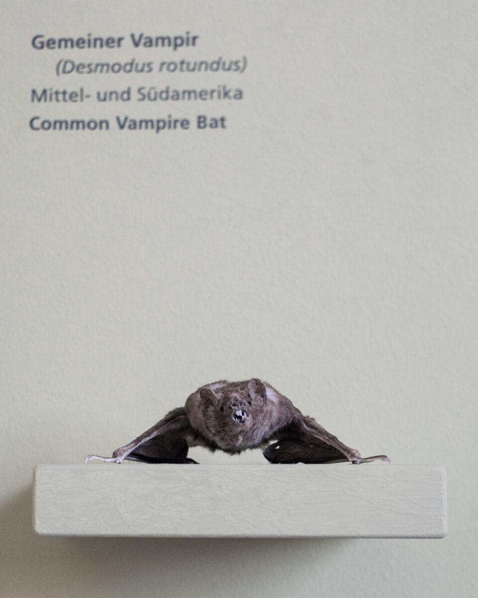 Karsten Rohrbeck: Studiis Zoologicis (12/17)