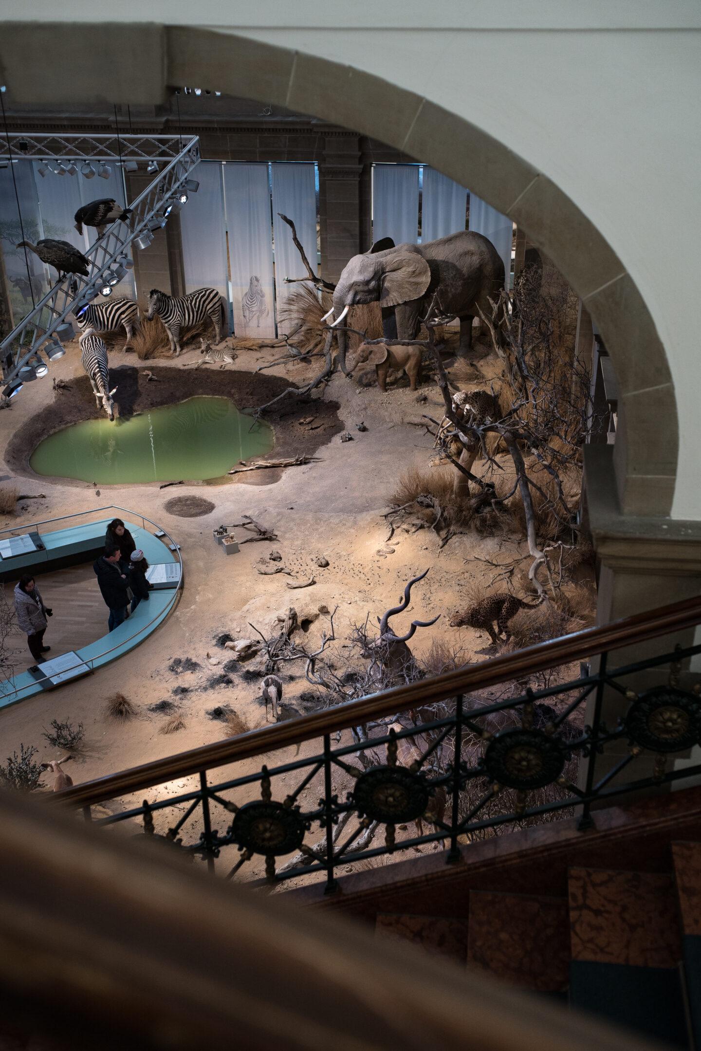 Karsten Rohrbeck: Studiis Zoologicis (13/17)