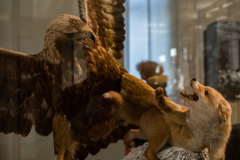 Karsten Rohrbeck: Studiis Zoologicis (14/17)
