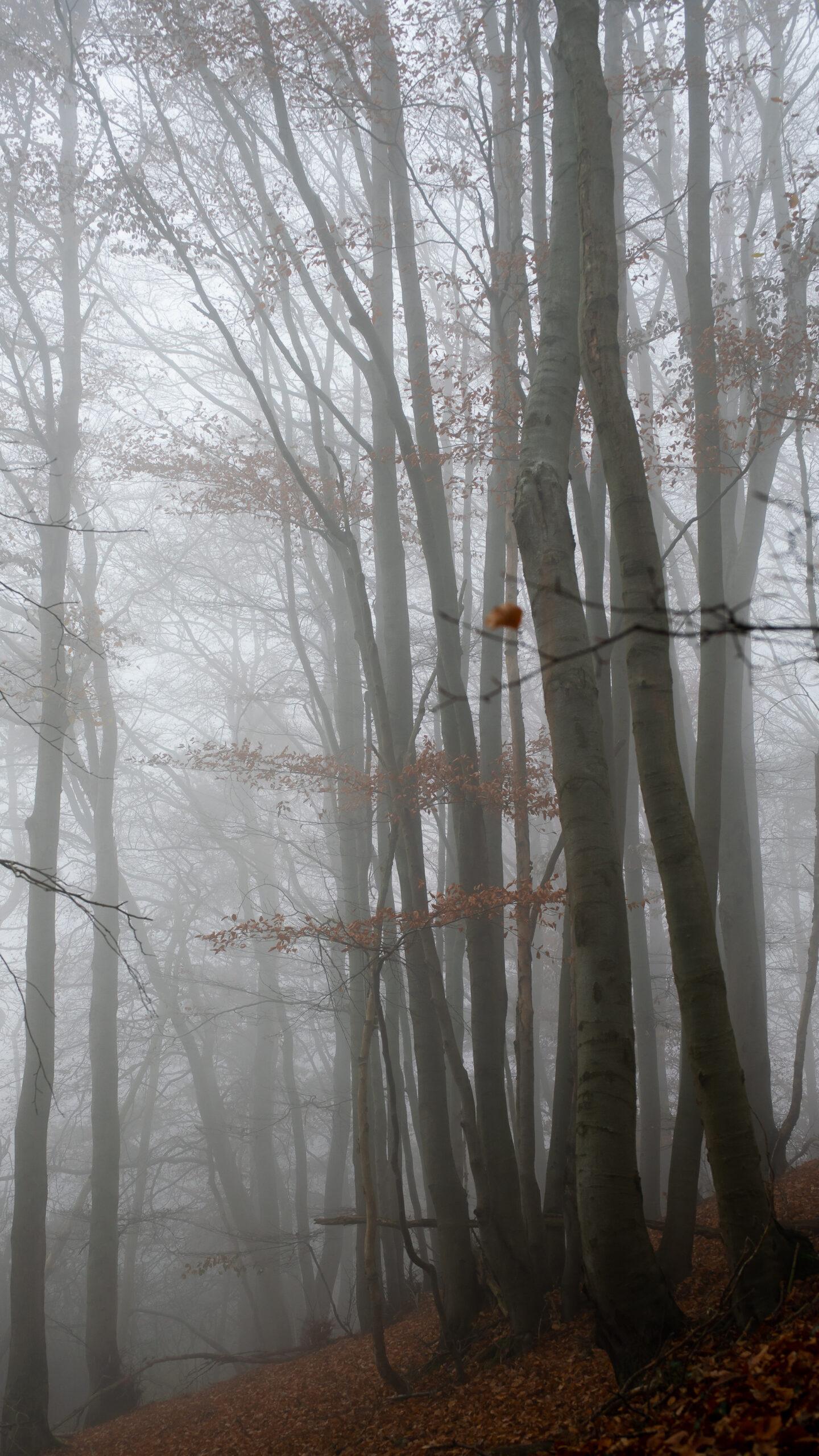 Karsten Rohrbeck: November-Nebel in NRW (2)