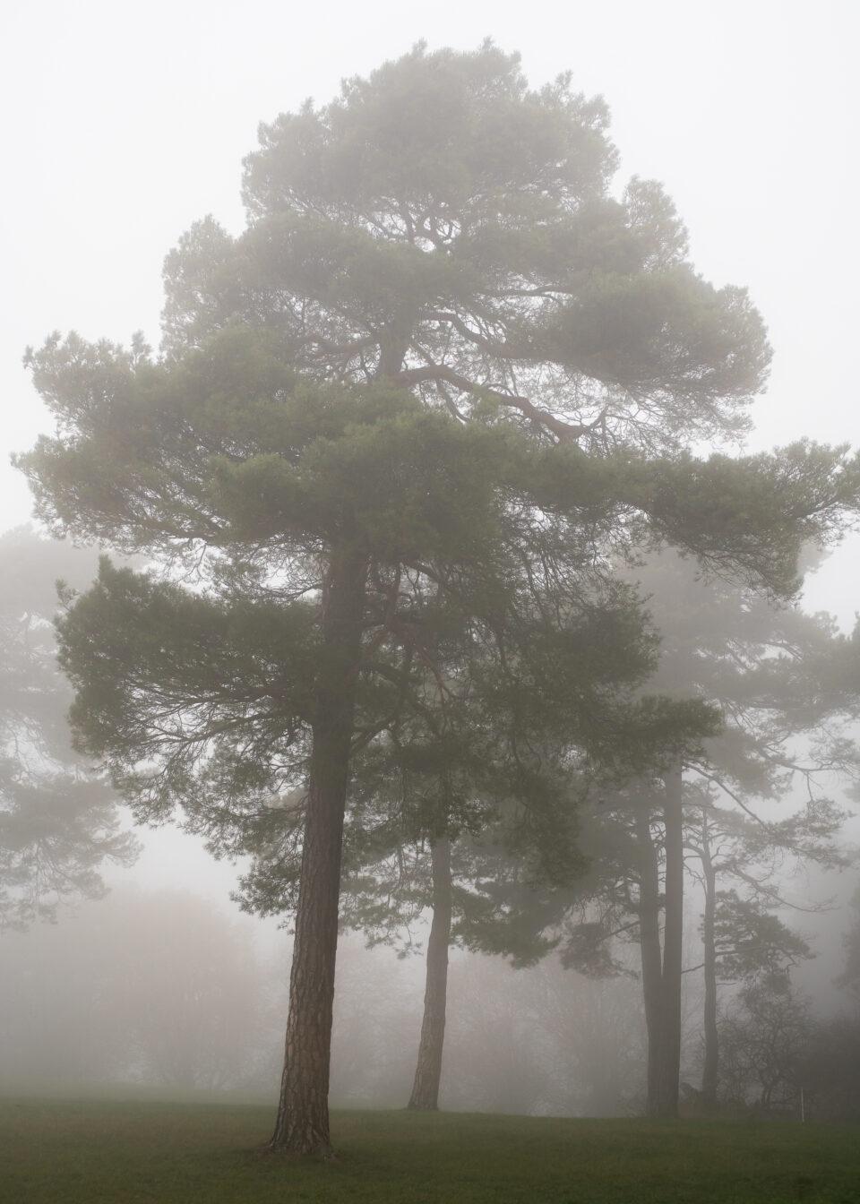 Karsten Rohrbeck: November-Nebel in NRW (4)