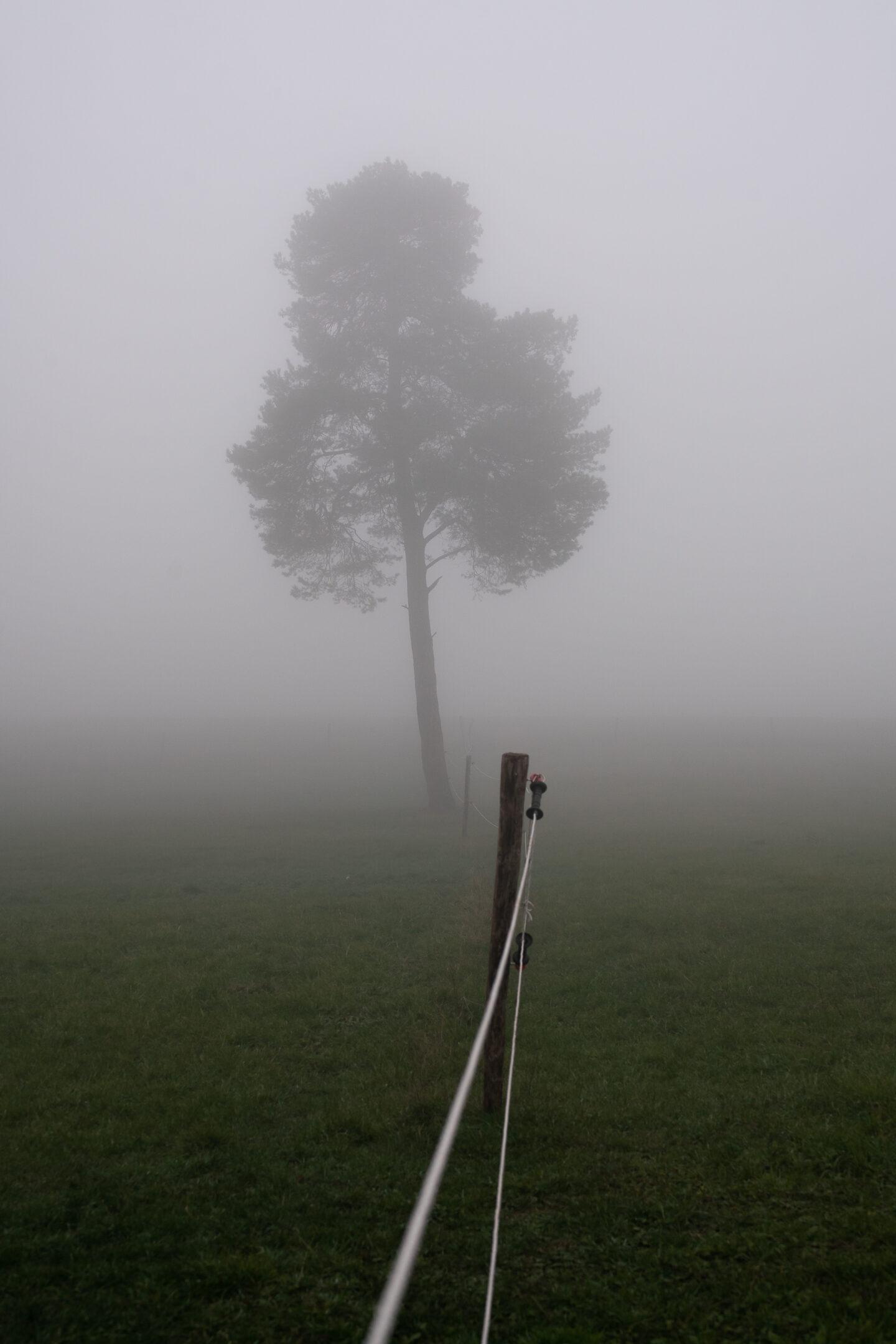 Karsten Rohrbeck: November-Nebel in NRW (6)