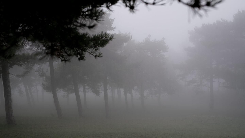 Karsten Rohrbeck: November-Nebel in NRW (7)