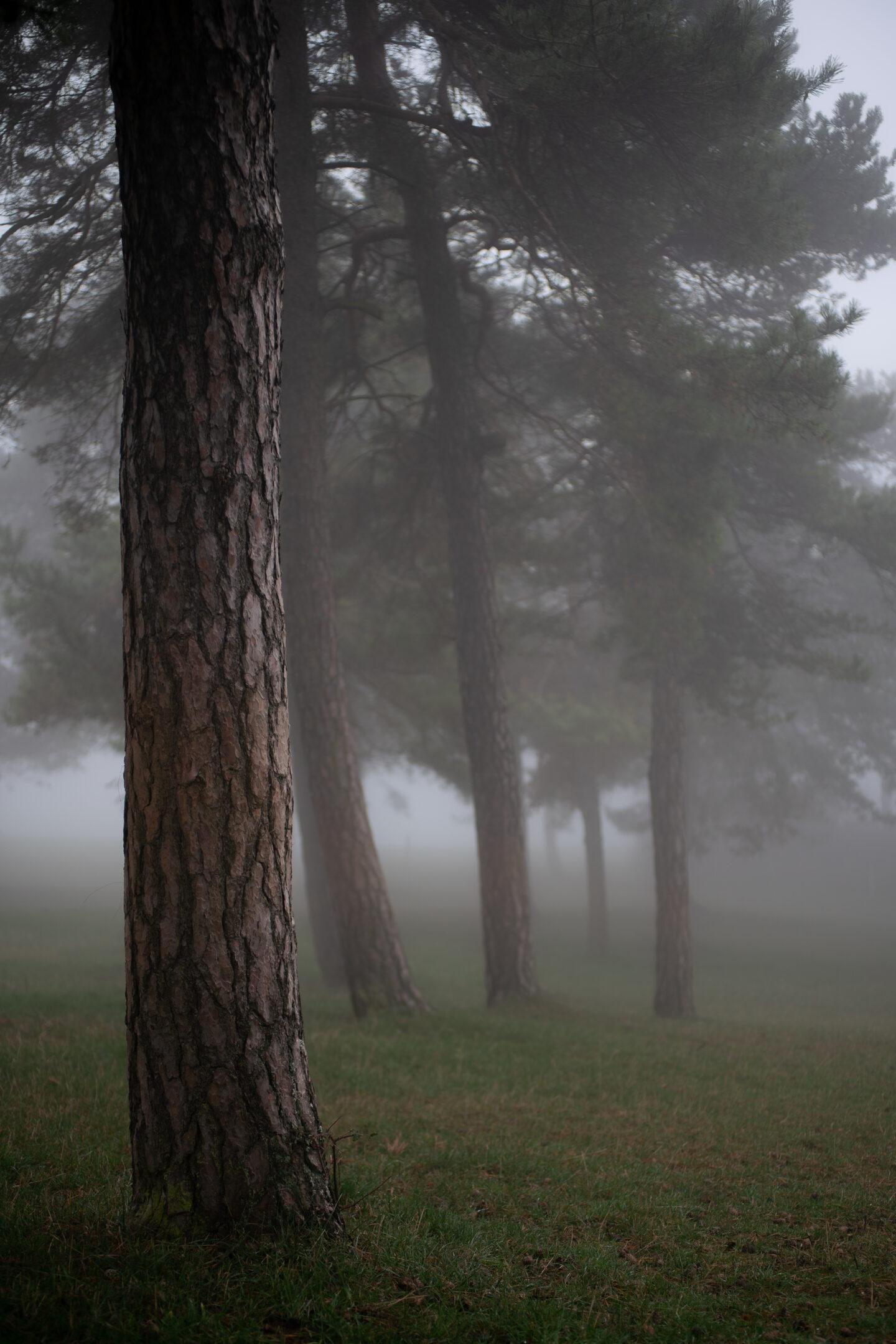 Karsten Rohrbeck: November-Nebel in NRW (8)