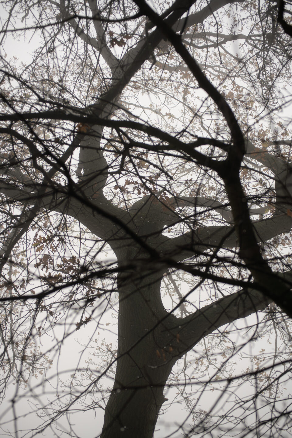 Karsten Rohrbeck: November-Nebel in NRW (9)