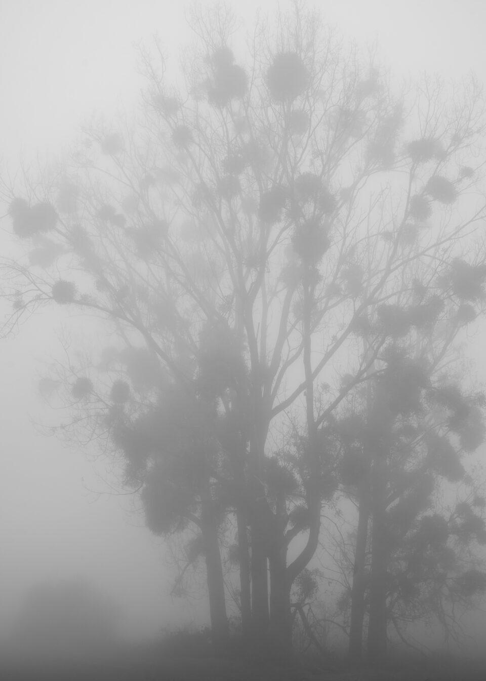 Karsten Rohrbeck: November-Nebel in NRW SW (5)