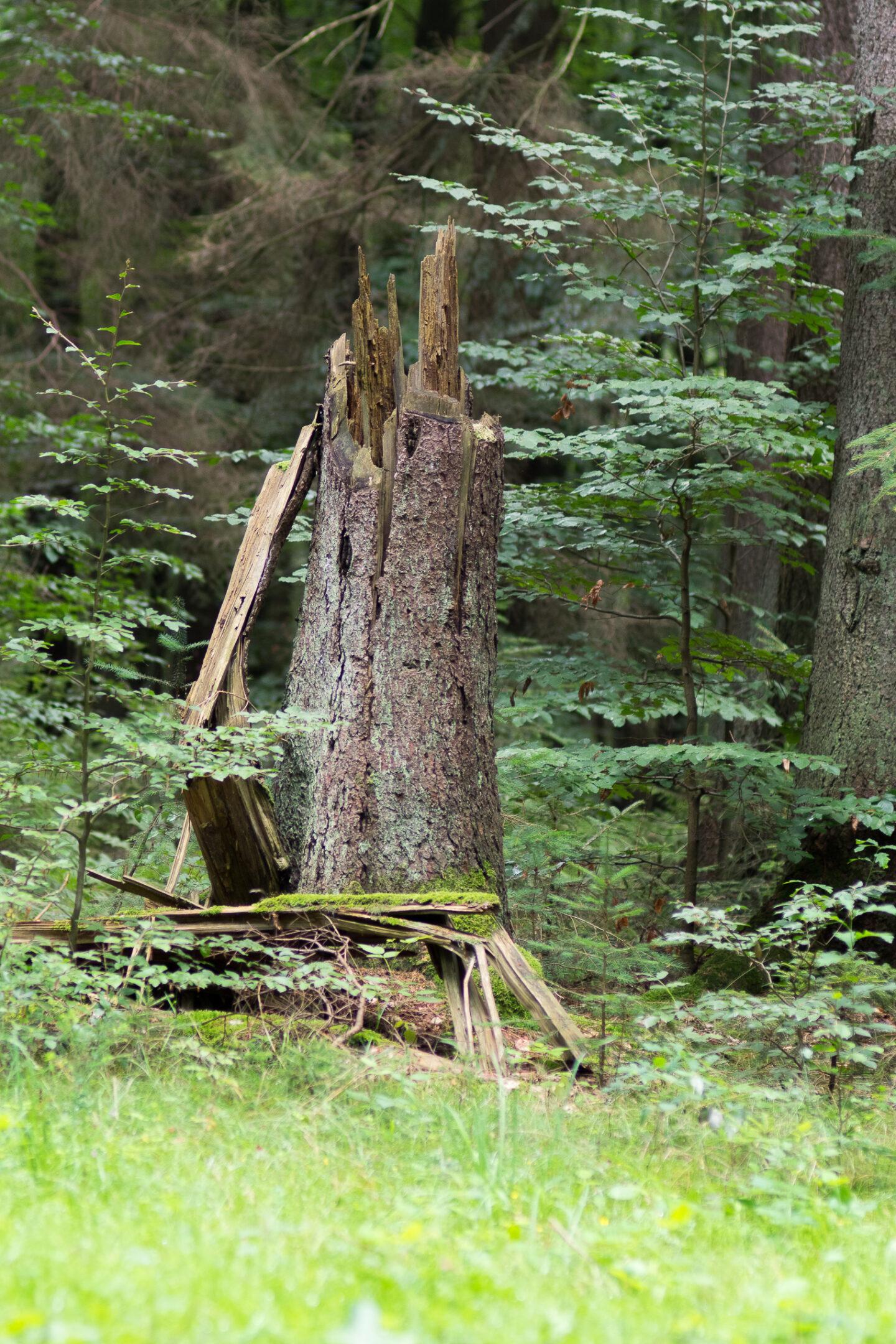 Karsten Rohrbeck: Heide Urwald 36