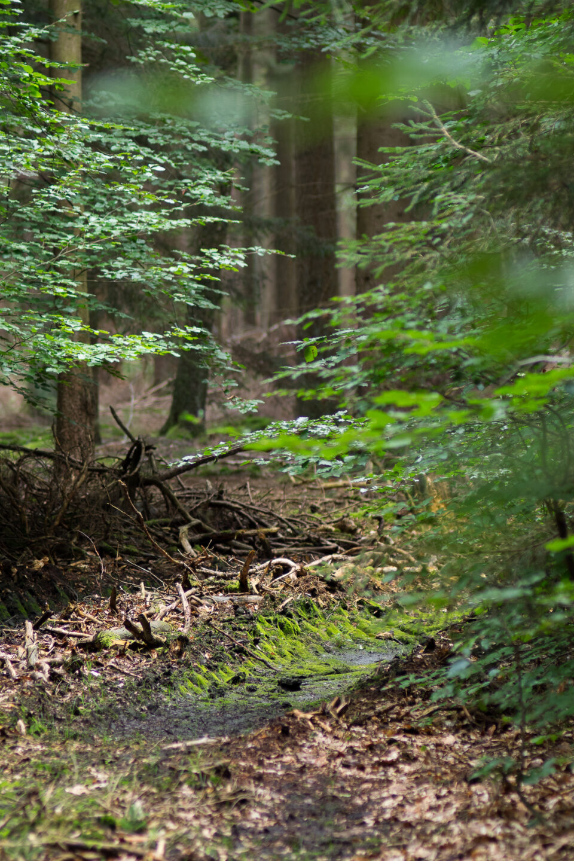 Karsten Rohrbeck: Heide Urwald 34