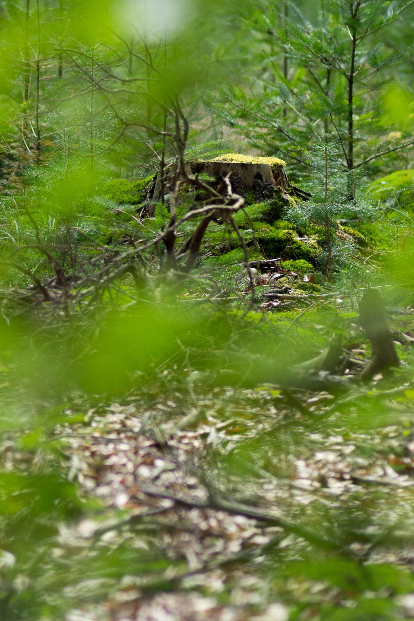 Karsten Rohrbeck: Heide Urwald 31