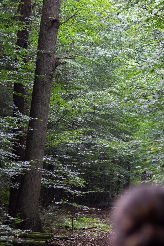 Karsten Rohrbeck: Heide Urwald 19