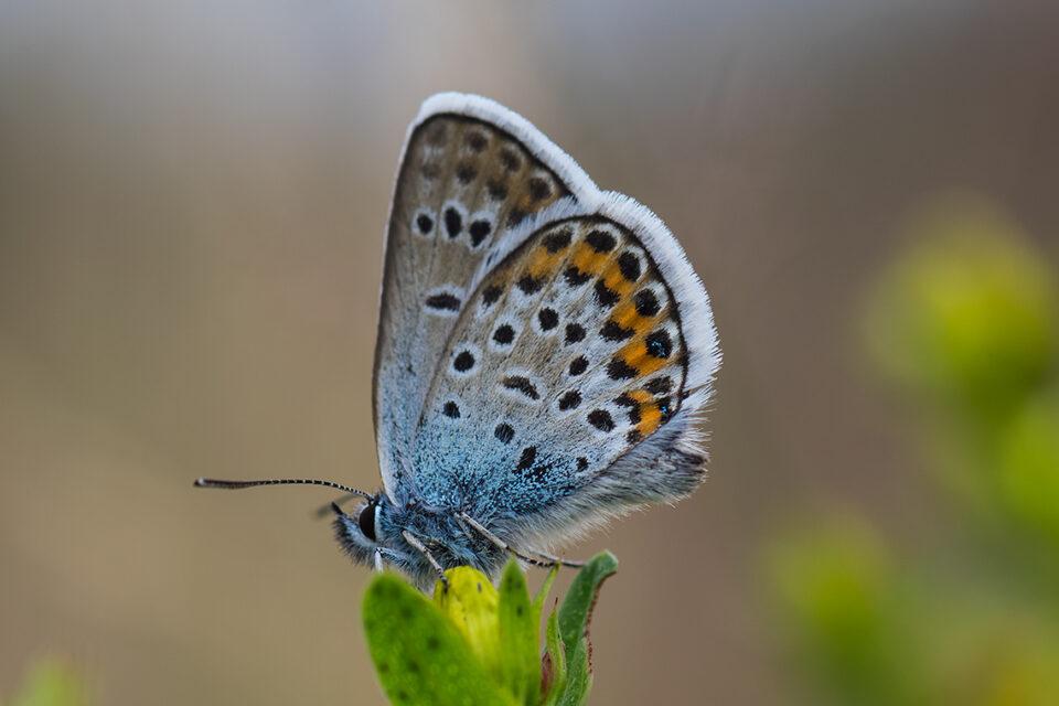 Karsten Rohrbeck: Teufelsheide (Detail IV, Schmetterling)