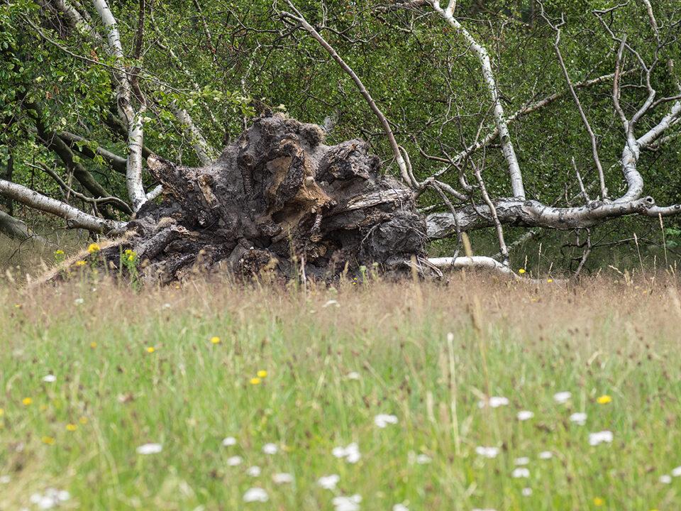 Karsten Rohrbeck: Blick auf Sturmschaden (durch die Teufelsheide I)