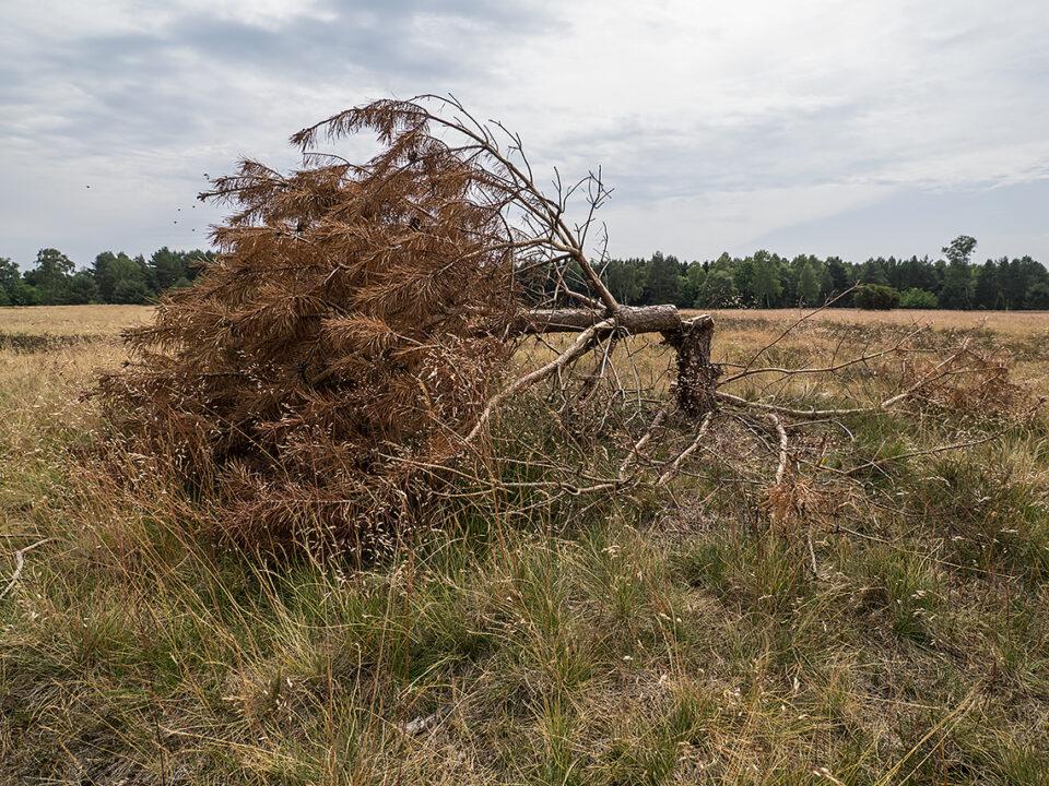 Karsten Rohrbeck: Blick auf Sturmschaden (Teufelsheide I)