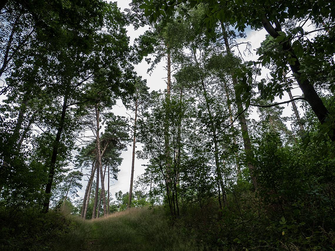 Karsten Rohrbeck: Blick aus dem Heide-Wald (Teufelsheide)