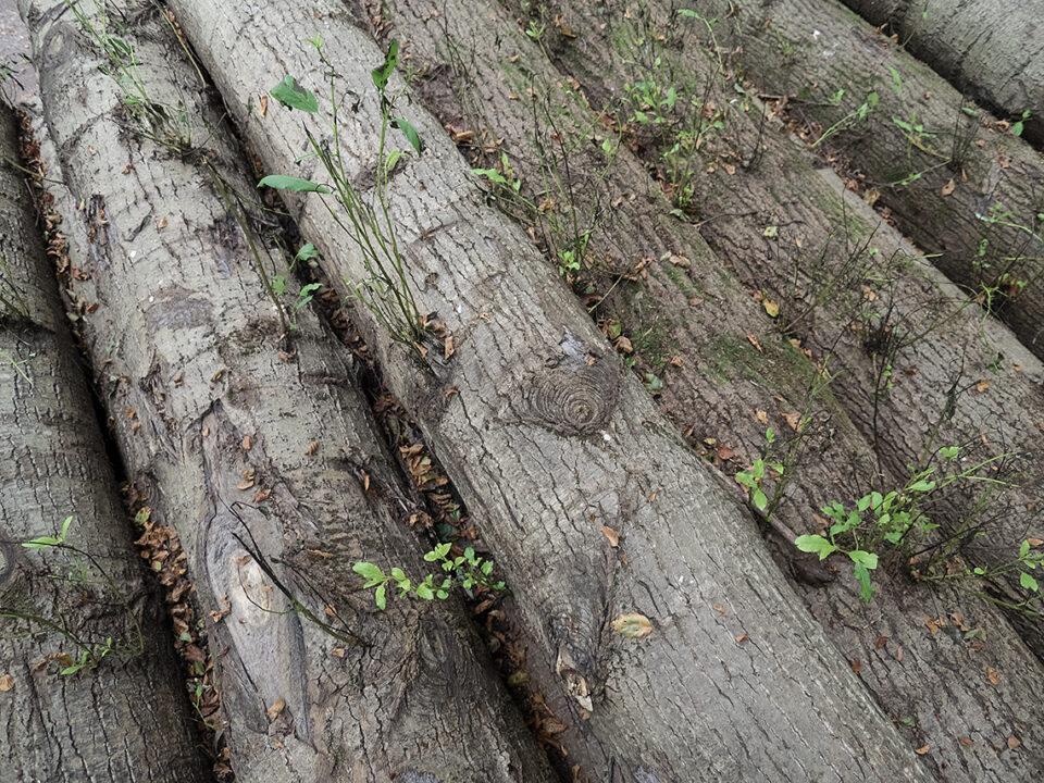 Karsten Rohrbeck: Baumstamm-Haufen im Wald um Bensberg