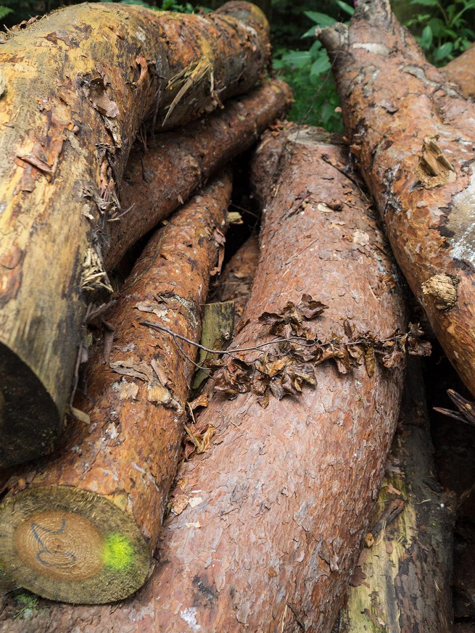 Karsten Rohrbeck: Baumstämme im Wald um Bensberg (gefällt)